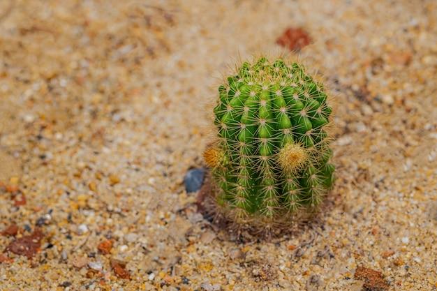 Pequeñas plantas de cactus y desierto
