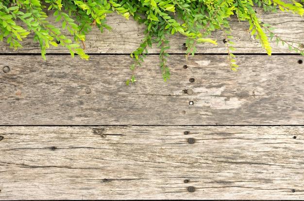 Pequeñas ramas verdes en paneles de madera vieja marrón