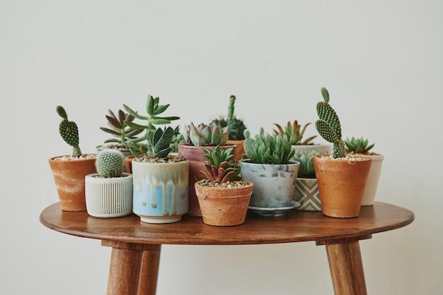 Pequeñas suculentas y cactus en una mesa retro