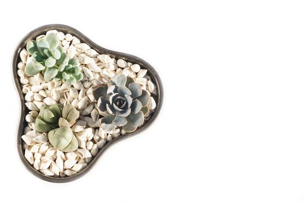 Pequeñas suculentas en una olla de cerámica.
