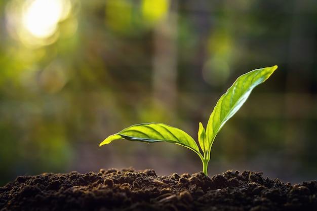 Pequeño árbol que crece en la luz del sol