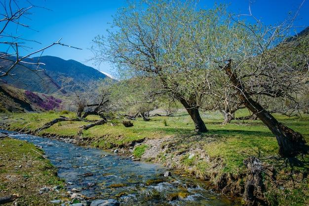 Pequeño arroyo de montaña entre las colinas en flor y las montañas cubiertas de bosque.