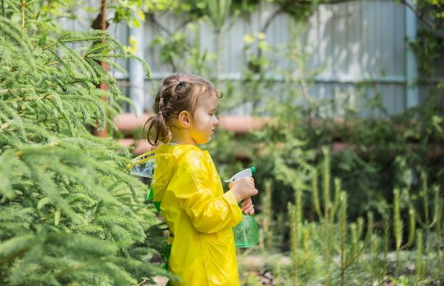 Un pequeño ayudante en un impermeable amarillo rocía árboles coníferos en el invernadero