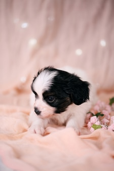 Pequeño cachorro sobre un fondo rosa