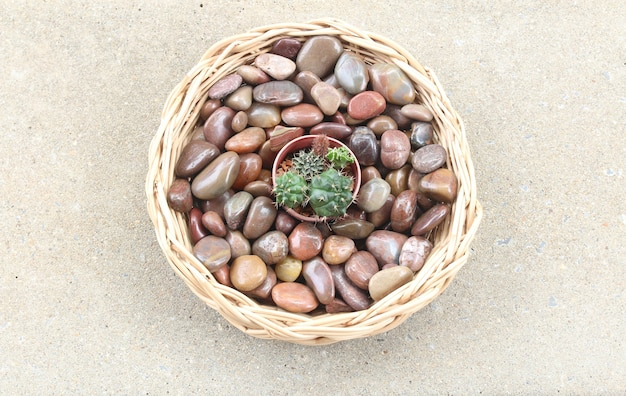 Pequeño cactus en una canasta