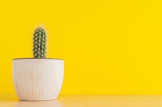 Pequeño cactus cereus en maceta en amarillo brillante
