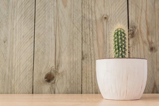 Pequeño cactus cereus en maceta sobre fondo de madera