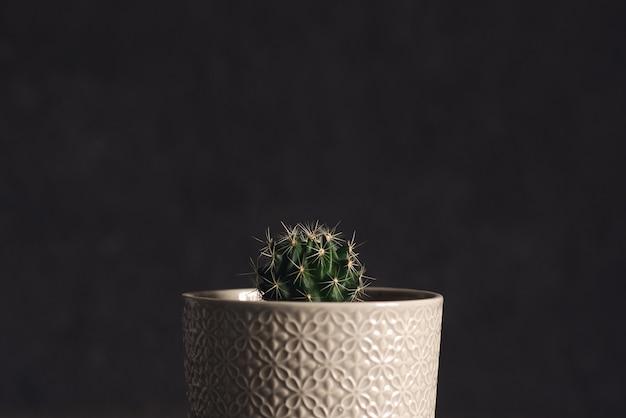 Pequeño cactus en una maceta sobre un fondo rosa