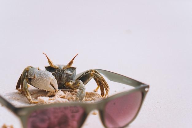 Pequeño cangrejo lindo en la playa junto al mar