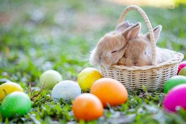 Pequeño conejito lindo que duerme en la cesta y los huevos de pascua en el prado