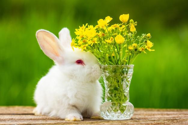 Un pequeño conejo blanco esponjoso lindo se sienta con un ramo de flores en un soleado día de primavera