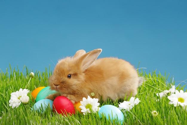 Pequeño conejo y huevos de pascua en hierba verde con el cielo azul. concepto de vacaciones de pascua.