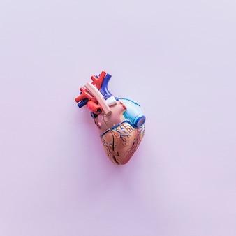 Pequeño corazón humano de plástico sobre mesa