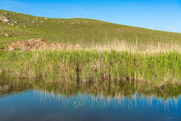 Pequeño estanque cubierto de juncos
