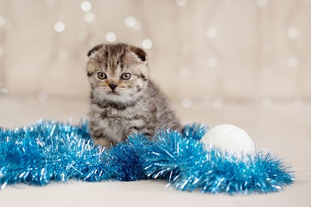 Un pequeño gatito atigrado con oropel azul y bolas blancas de navidad. regalo, fiesta, felicidad. concepto de navidad y año nuevo
