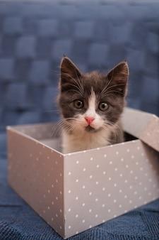 Pequeño gatito gris se sienta en una caja de regalo gris sobre un fondo azul. mascotas