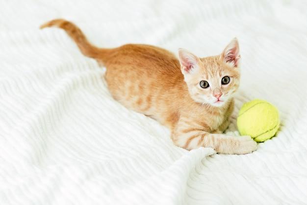 Pequeño gatito de jengibre juega con una pelota de tenis