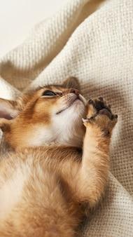 Pequeño gatito de jengibre está jugando