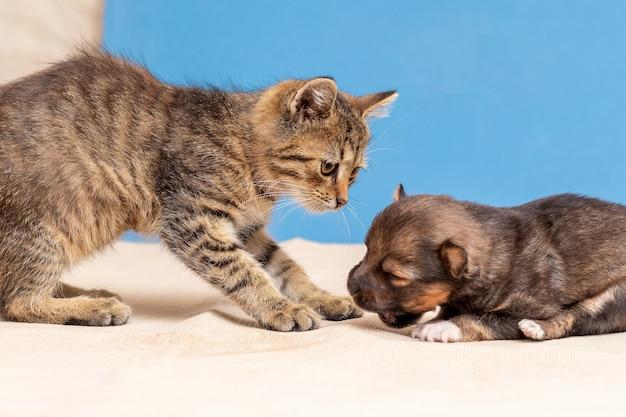 Un pequeño gatito juega con un cachorro, un gato con un cachorro amigos