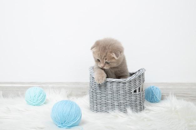 Pequeño gatito lindo en una cesta con bolas de hilo en una pared blanca. lindo gatito jengibre