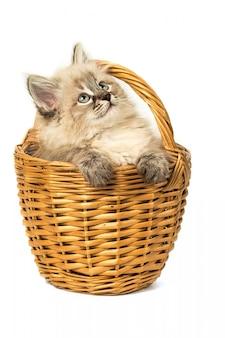 Pequeño gatito lindo en cesta de mimbre en blanco