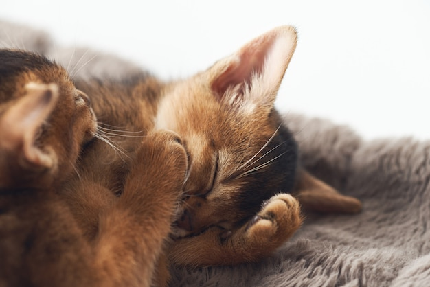 Pequeño gatito lindo del jengibre que duerme en una manta marrón de la piel