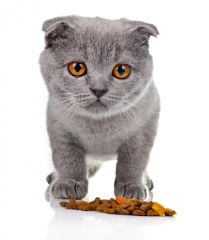 Pequeño gatito que come el alimento de animal doméstico aislado
