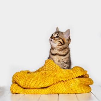 Pequeño gato gris con bufanda de lana amarilla aislada