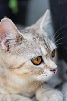 Pequeño gato lindo encantador con los ojos amarillos hermosos en la arena blanca en el jardín al aire libre