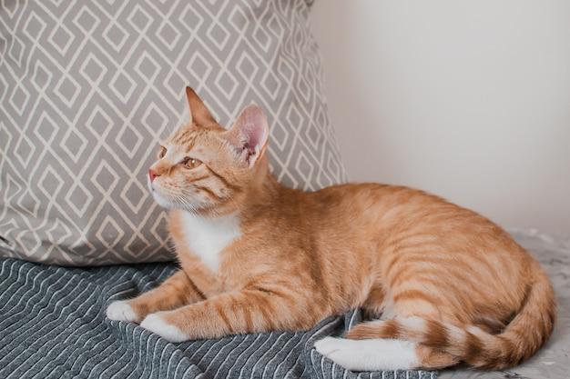 Pequeño gato lindo del jengibre que pone en una manta gris en casa