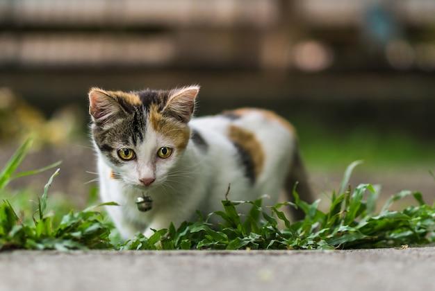 Pequeño gato mirando
