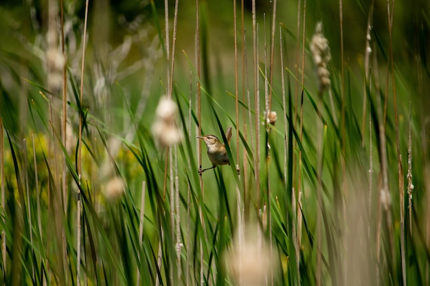 Pequeño gorrión posado en plantas verdes con dos patas en plantas separadas