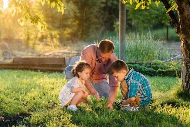 Pequeño hermano y hermana están plantando plántulas con su padre en un hermoso jardín de primavera al atardecer.