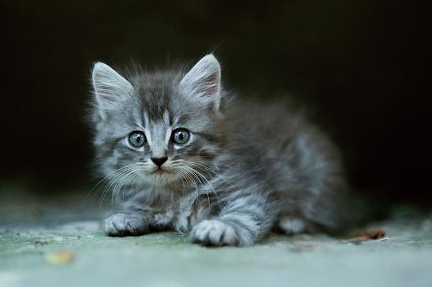 Pequeño y lindo gatito esponjoso
