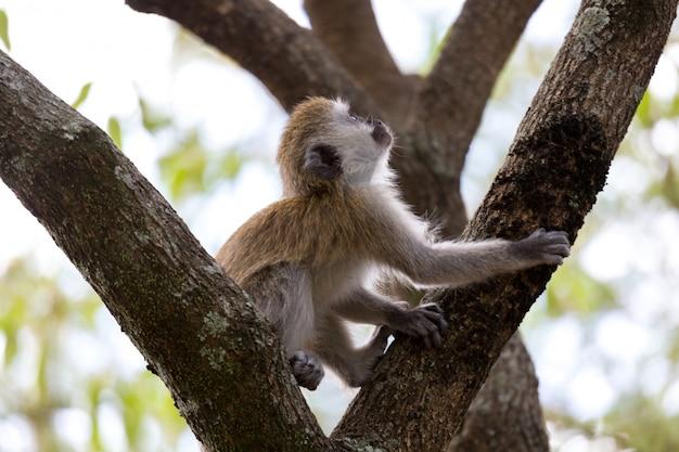 Un pequeño mono está jugando en la rama de un árbol.