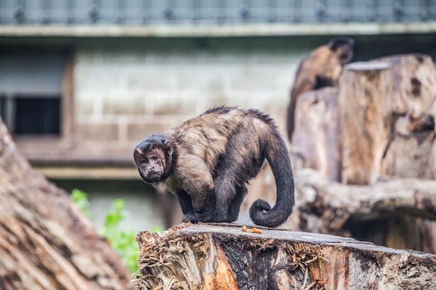 Pequeño mono en parque al aire libre en nueva zelanda