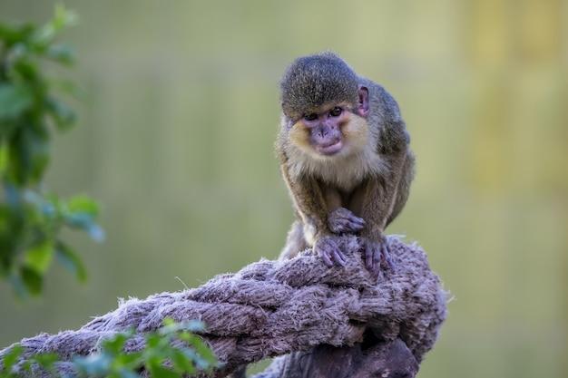 Pequeño mono en el zoológico de barcelona, en españa