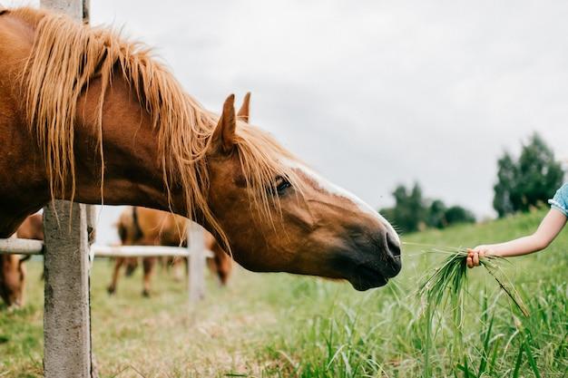 Pequeño niño divertido asustado que alimenta el caballo salvaje con la hierba. muchacha asustada cautelosa que toca el hocico del caballo al aire libre en la naturaleza. superando el miedo. cara expresiva animal. chico amable y encantador en un hermoso vestido azul