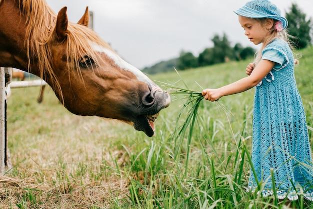 Pequeño niño divertido asustado en el vestido azul que alimenta el caballo salvaje con la hierba.