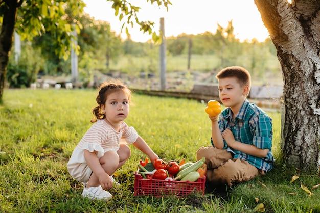 Un pequeño niño y una niña se sientan bajo un árbol en el jardín con una caja entera de verduras maduras al atardecer. agricultura, cosecha. producto ecológico.