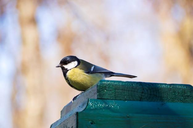 Pequeño pájaro amarillo en la cerca en parque. pájaro de teta en rusia. fondo de la fauna.