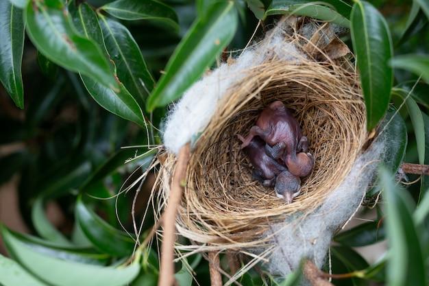Un pequeño pájaro en el nido en un árbol.