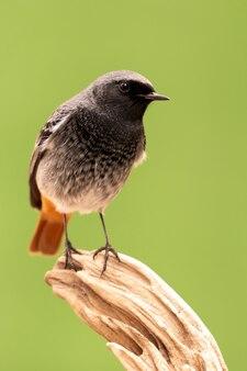 Pequeño pájaro en un tronco