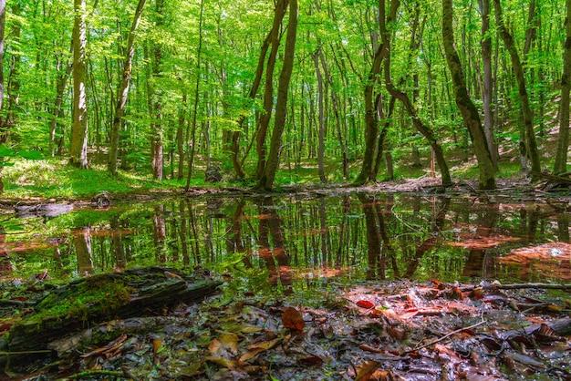 Pequeño pantano en un bosque verde