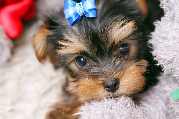 Pequeño perrito lindo en casa