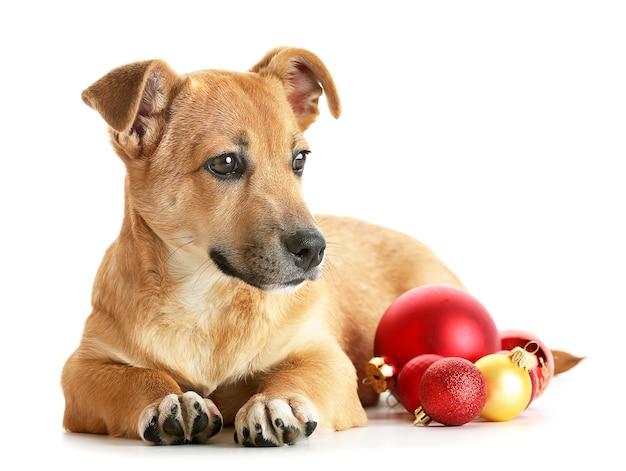 Pequeño perro lindo divertido con juguetes de navidad, aislado en blanco