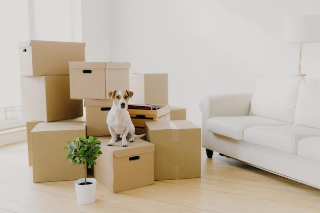 Pequeño perro de pedigrí posa en un montón de cajas de cartón con objetos personales