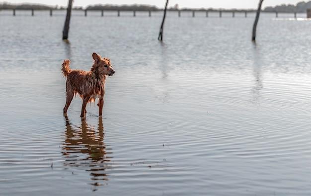 Pequeño perro de pie sobre el agua