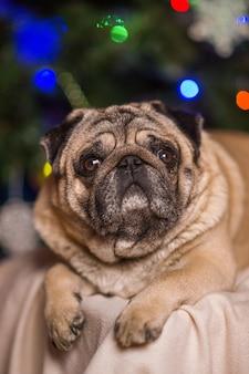Pequeño perro rojo feliz que lleva un sombrero del partido, fondo de las luces de la navidad. hermoso perro pekinés posando a la cámara y celebrando