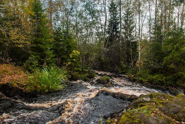 Pequeño río en el bosque de carelia